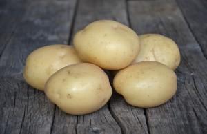 solanum potato varieties